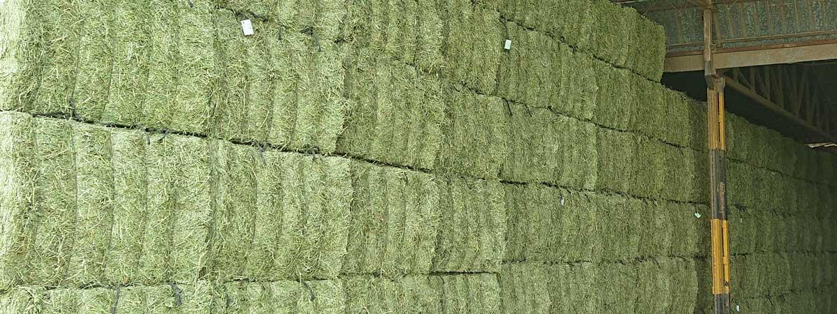 Almacén de alfalfa